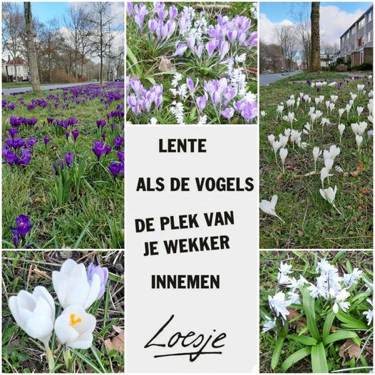 Lente aan de Jan Jelles Hofleane!